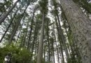 Wood-first initiative sought for NZ construction